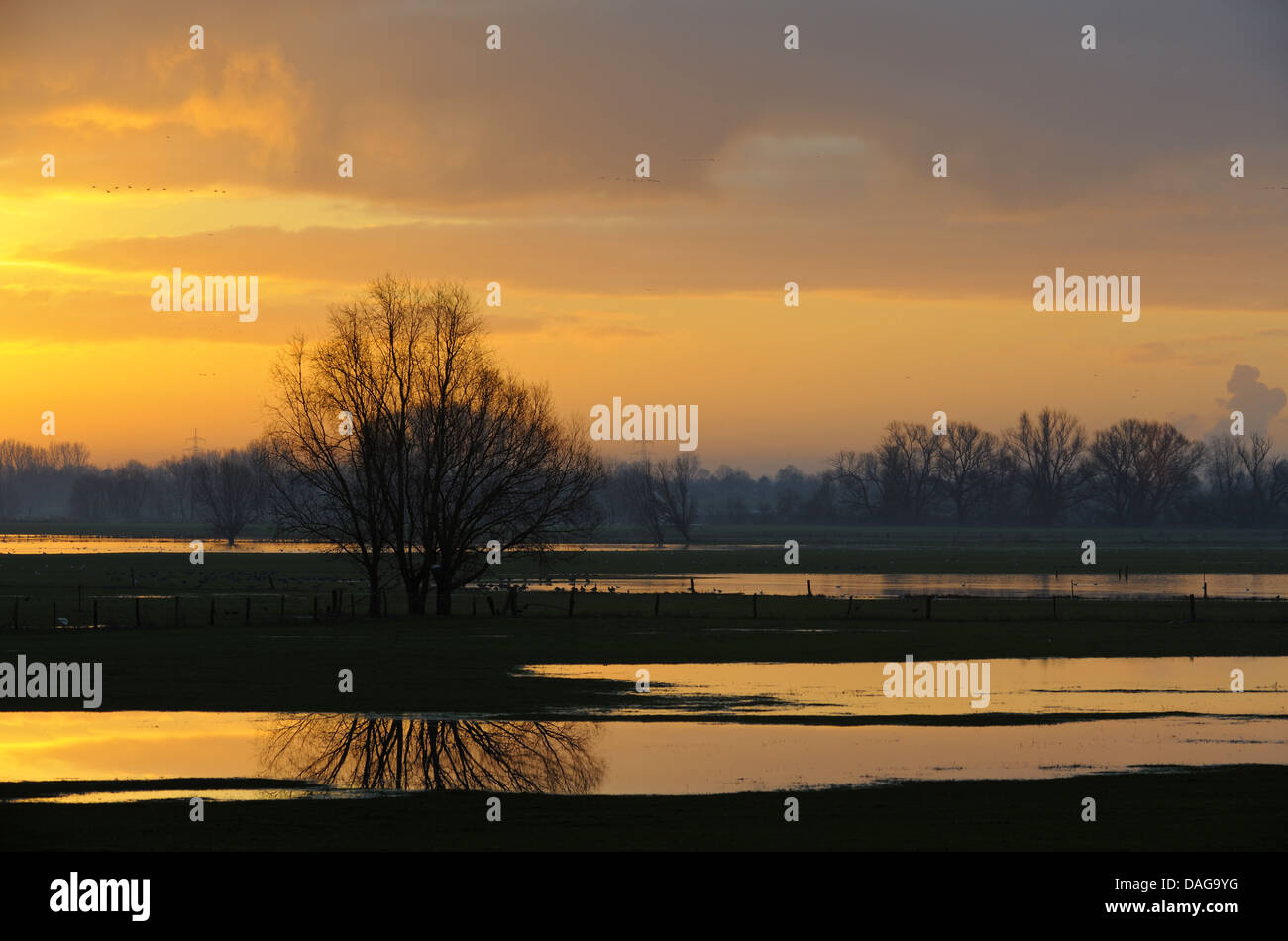 flooded meadows at Lower Rhine region at sunrise, Germany, North Rhine-Westphalia, Lower Rhine, Rees Stock Photo