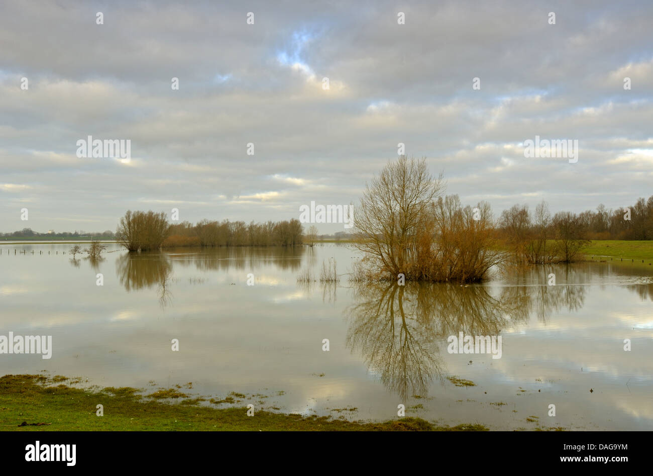 flooded meadows at river Rhine, Germany, North Rhine-Westphalia, Lower Rhine, Rees Stock Photo