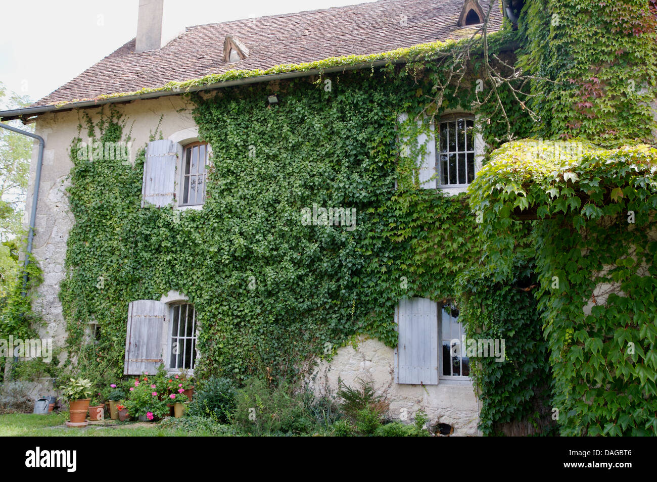Old French Country House With Ivy Clad Walls And Windows