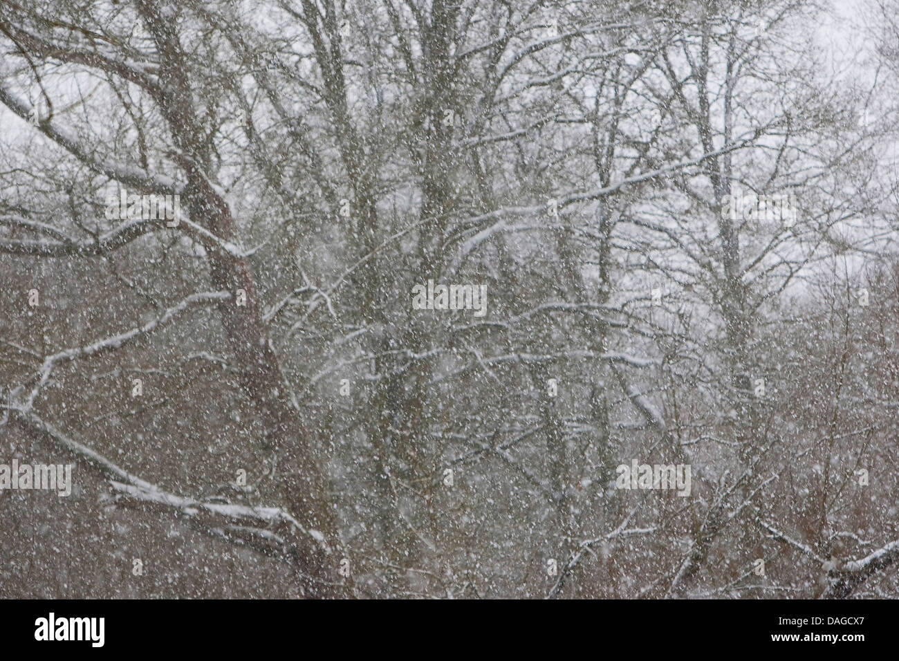 snowfall in winter, Germany - Stock Image
