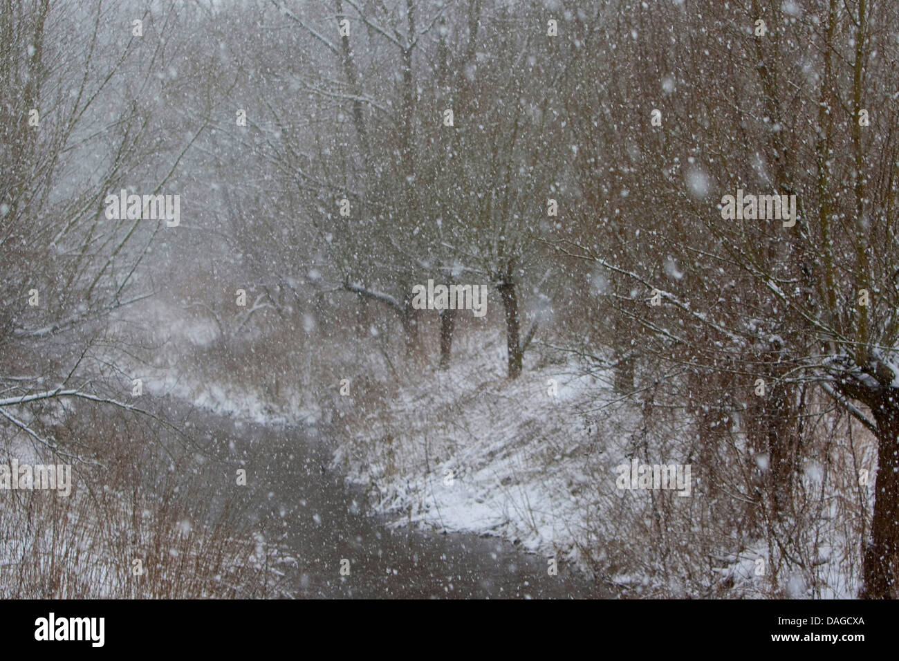 snowfall in winter at a creek, Germany - Stock Image