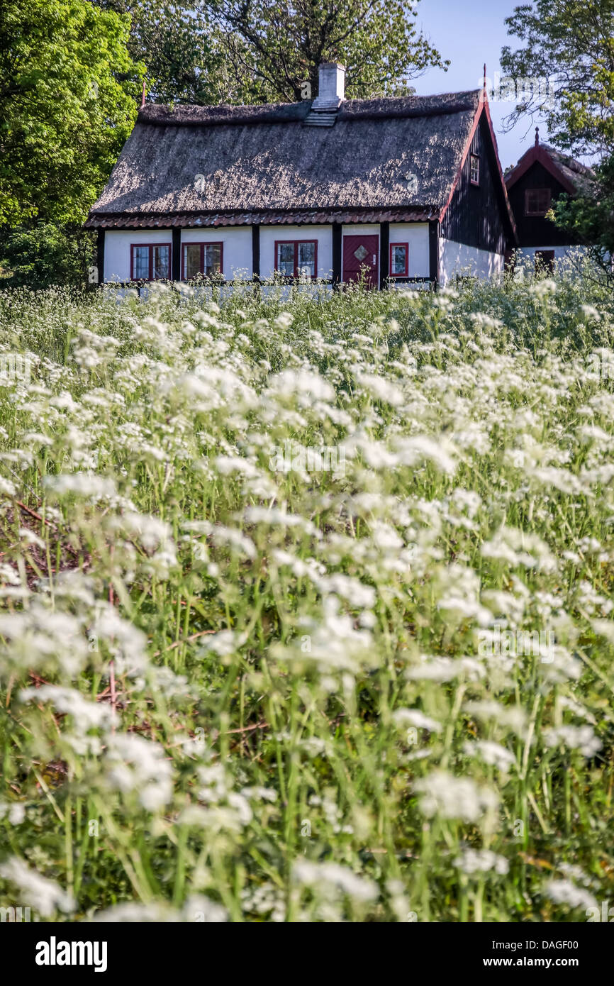 Idyllic country cottage with spring meadow on Bornholm, Denmark - Stock Image