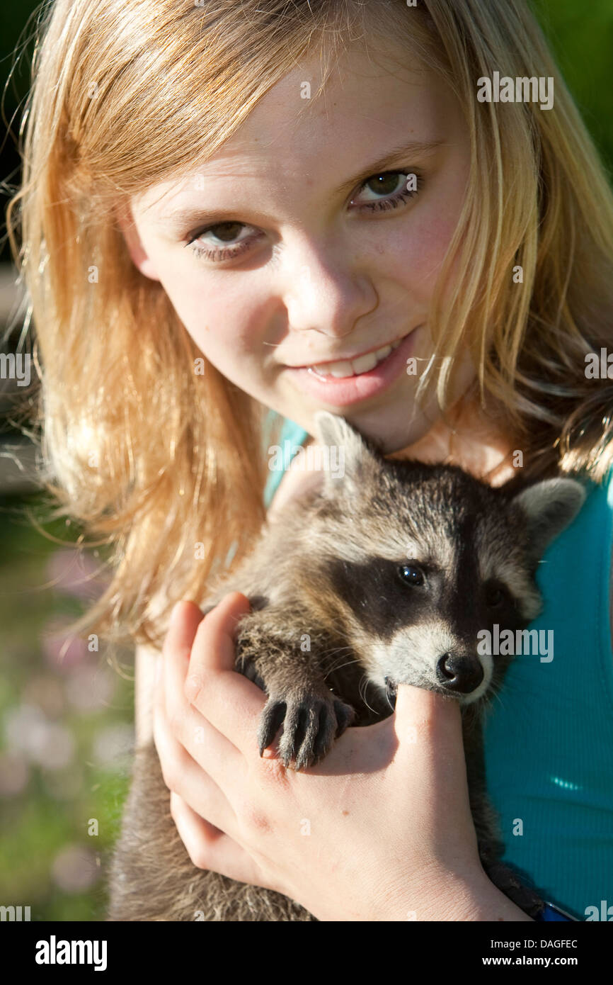 common raccoon (Procyon lotor), handraised raccoon sucking at the finger of a girl, Germany - Stock Image