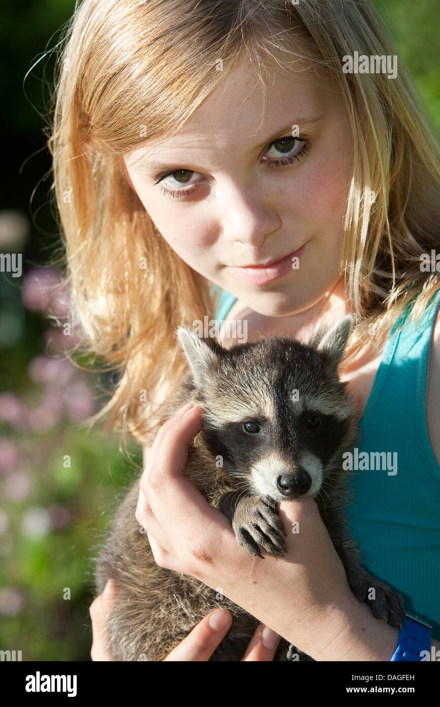 common raccoon (Procyon lotor), handraised raccoon sucking at the finger of a teenage girl, Germany - Stock Image
