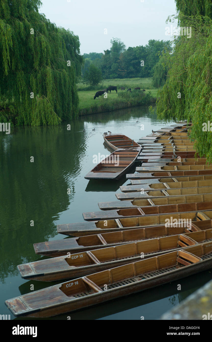 Punts and Punting on the river Cam, Cambridge, July 2013, England, Students and tourist enjoying punting on The - Stock Image