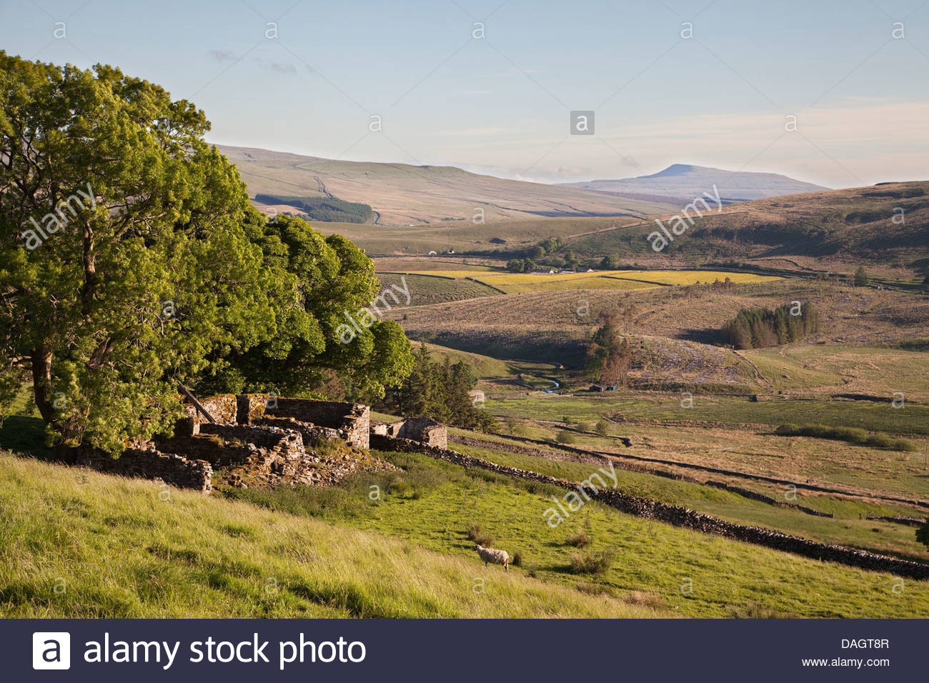 Meadows in the Upper Eden Valley, Yorkshire Dales, UK - Stock Image