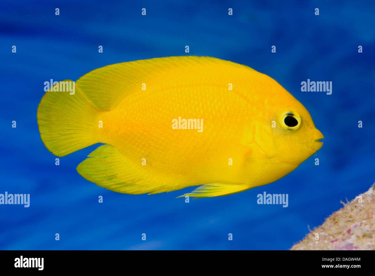 b5e36149ad Complementary Coloring Stock Photos & Complementary Coloring Stock ...