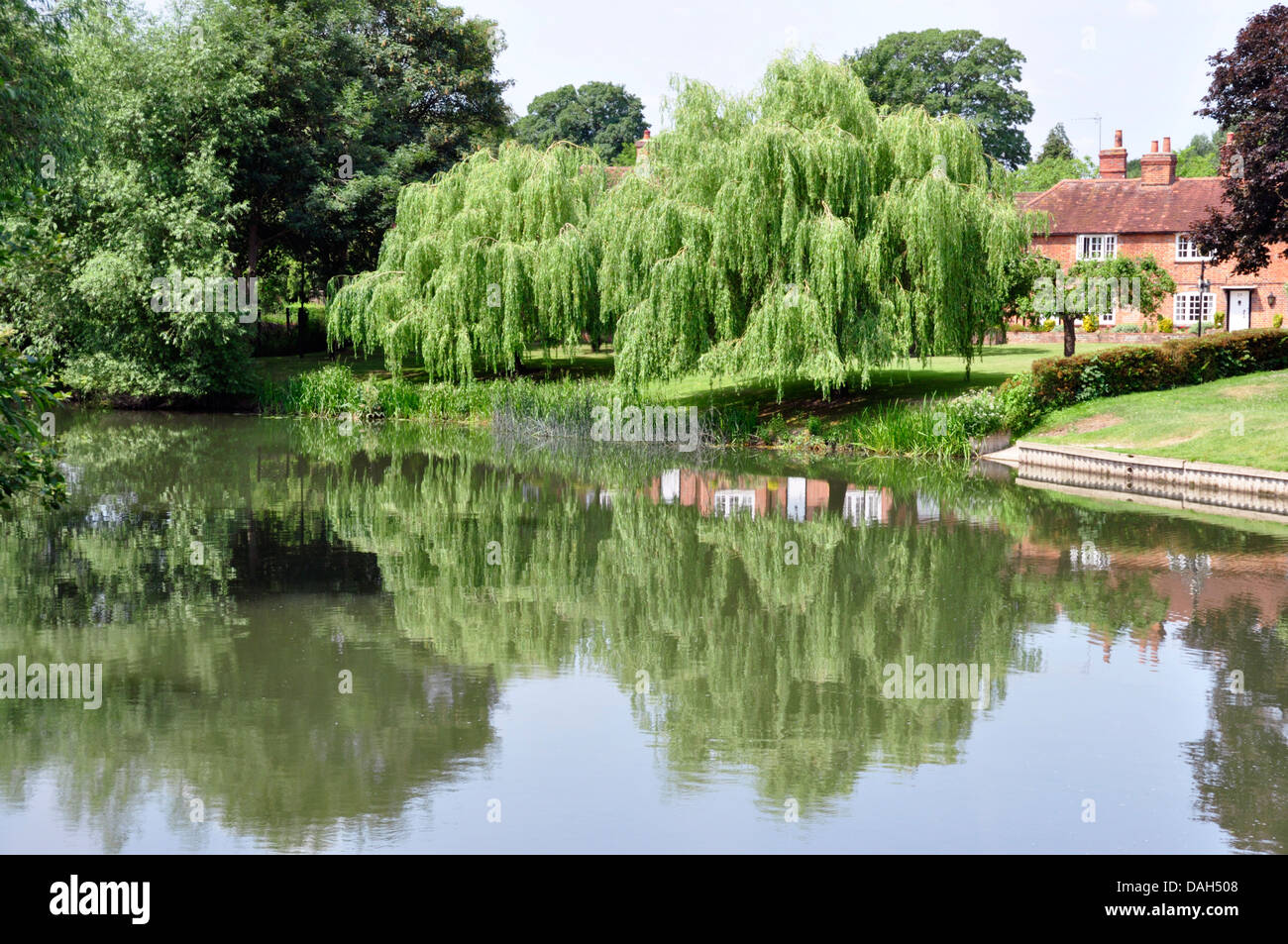 Berks - Sonning on Thames - summer day - trees - weeping willows  reflected in the water - cottages nearby - sunlight - Stock Image