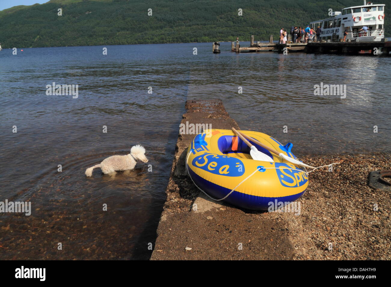 Tarbet, Loch Lomond, Scotland, UK. 13th July 2013. Children and Dogs cool off in Loch Lomond. Paul Stewart /  Alamy Stock Photo