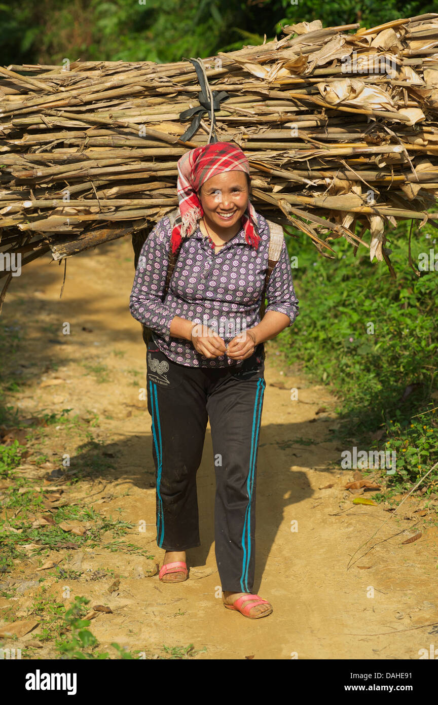 Vietnamese woman on a rural path carrying firewood. Bac Ha, Lao Cai Province, Vietnam - Stock Image