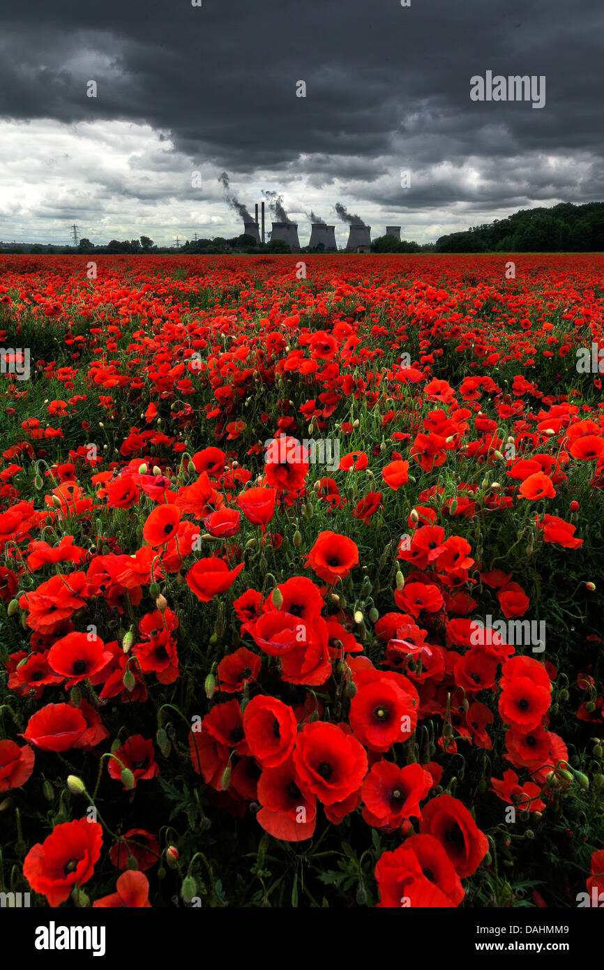Poppies - Ferrybridge Power Station - Stock Image