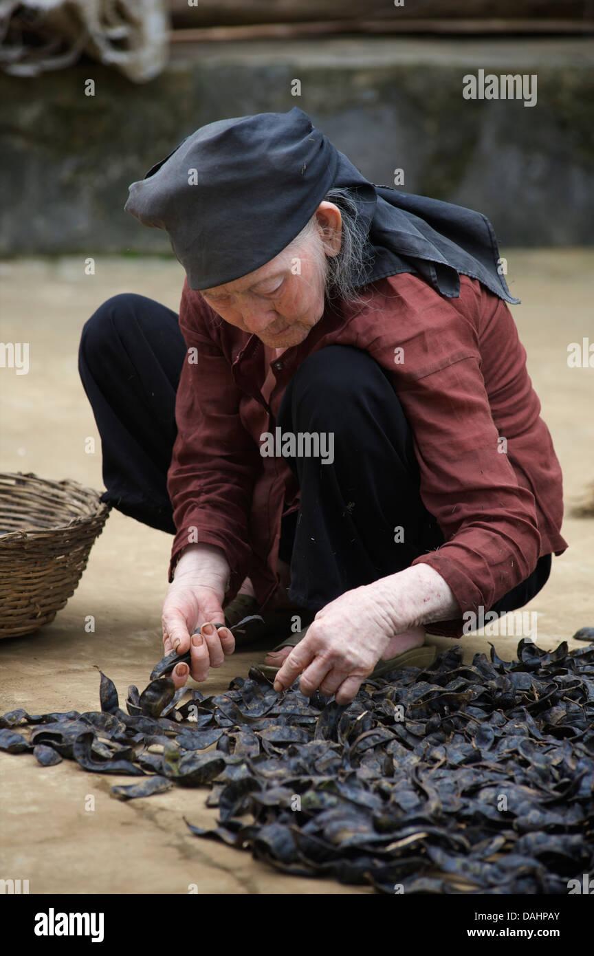 Elderly Vietnamese villager sorting through harvest. 'Cat Ba' Island, Vietnam - Stock Image