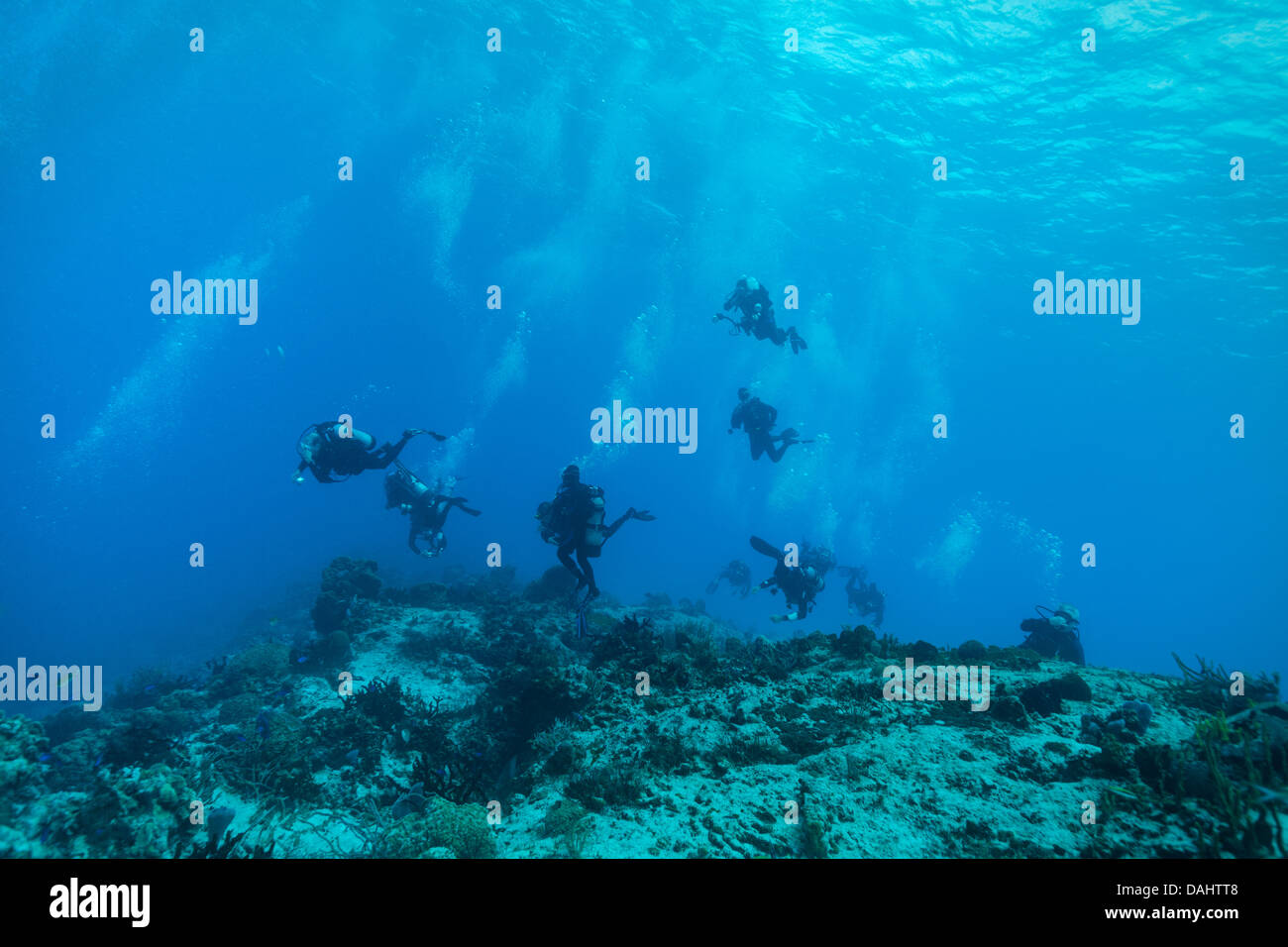 Eight scuba divers diving off the coast of Cozumel, Mexico. - Stock Image