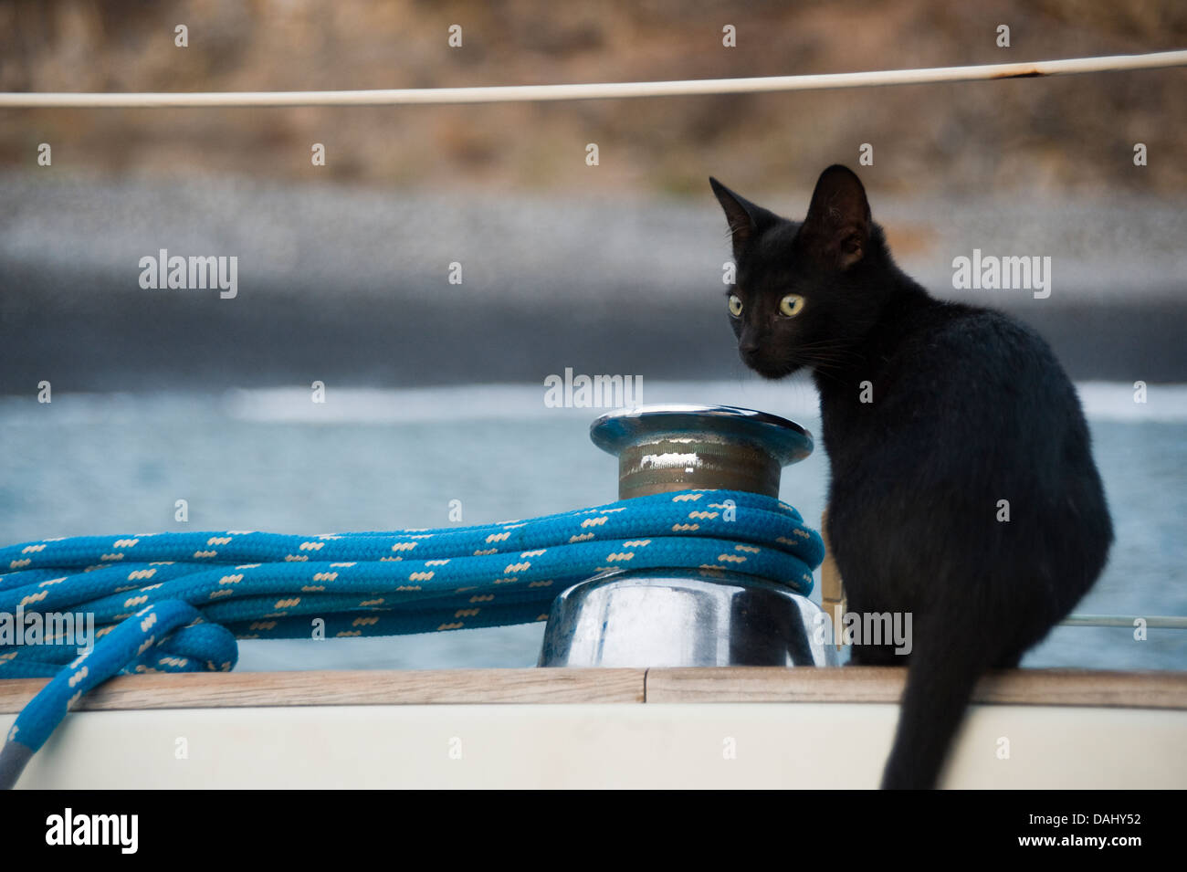 Black cat kitten on yacht looking apprehensive - Stock Image