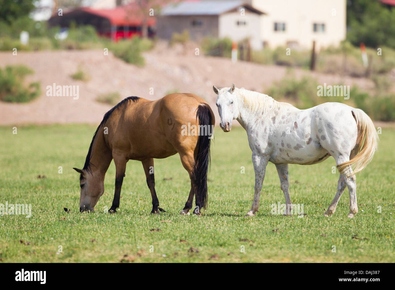Horses near San Antonio, New Mexico - Stock Image