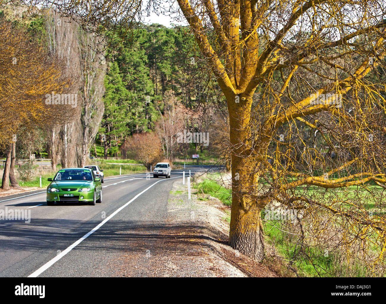 trees rural yellow lichen trunk branches cars road country side Fleurieu Peninsula South Australia Australian - Stock Image