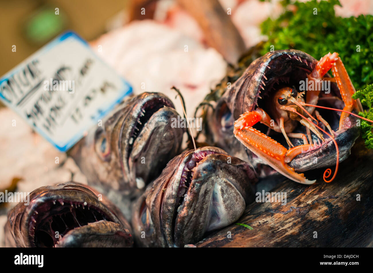 Hake fish on display in Borough Market, London - Stock Image