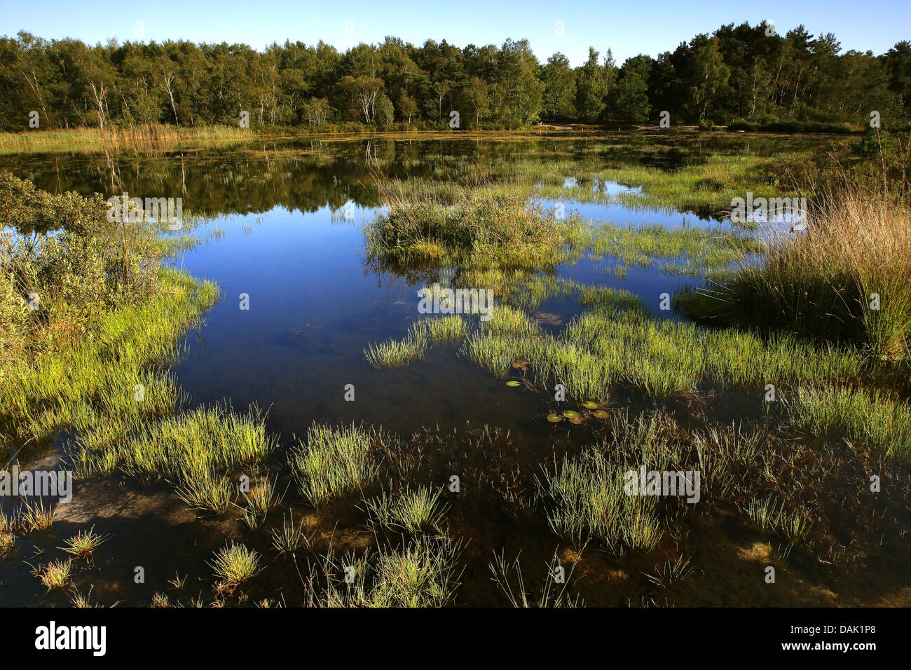 lake in Hoge Kempen national park, Belgium, Hoge Kempen National Park - Stock Image