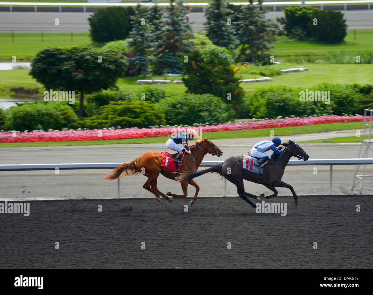 Regal Warning passing Csonka in race 4 of the Queens Plate at Woodbine Racetrack Toronto Canada - Stock Image