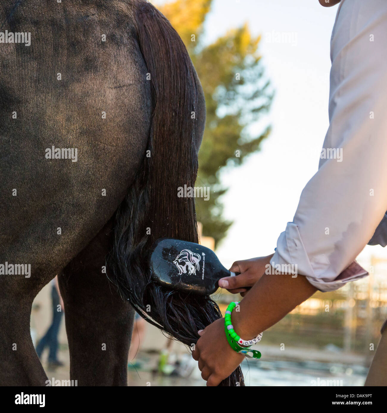 Young woman brushing the tail of her horse - Stock Image