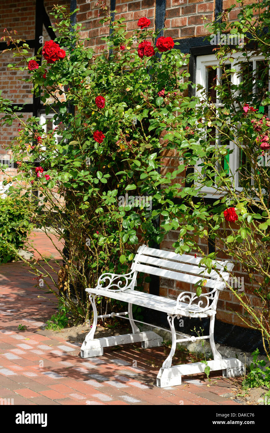 bench in front of a house with rambling roses, Germany - Stock Image