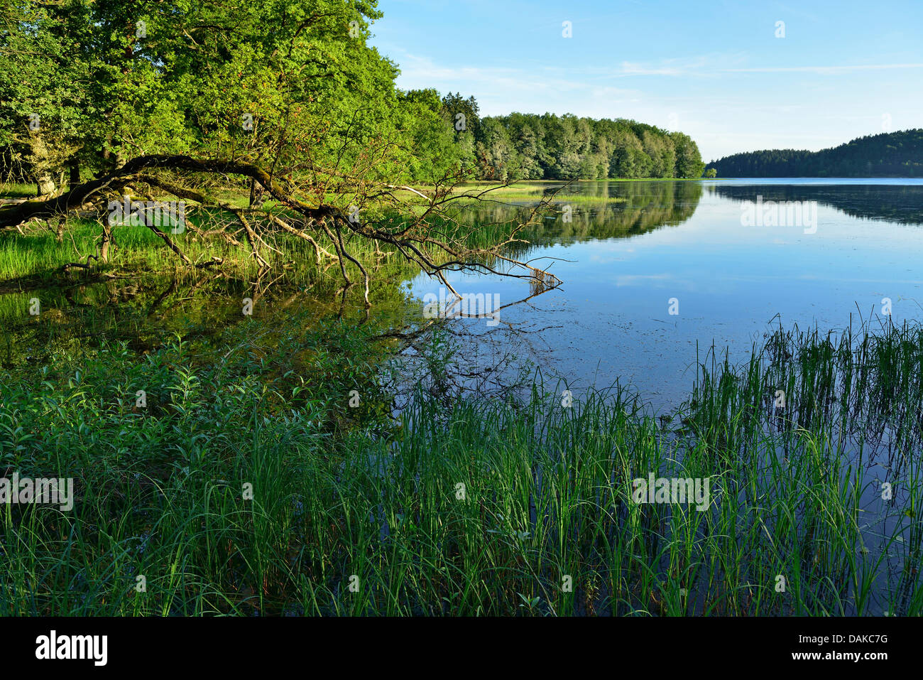 lake Moehne, Germany, North Rhine-Westphalia, Sauerland - Stock Image