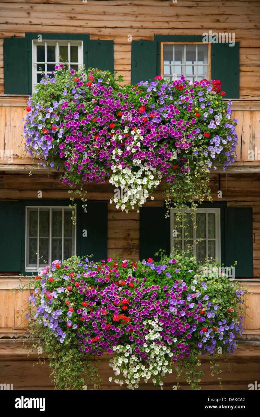garden petunia (Petunia x hybrida, Petunia-Hybride), lush balcony arrangements at a wooden house, Austria, Tyrol - Stock Image