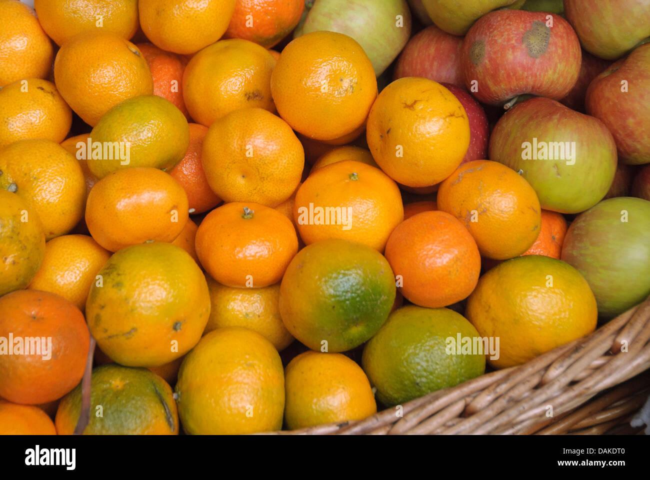 mandarin, tangerine (Citrus reticulata), basket with mandarines - Stock Image
