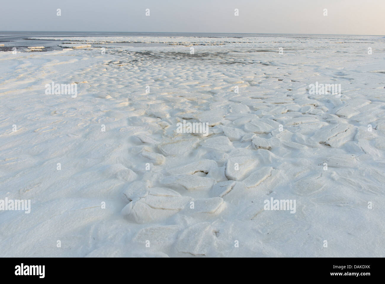 ice formation on the North Sea Coast, Netherlands, Texel - Stock Image