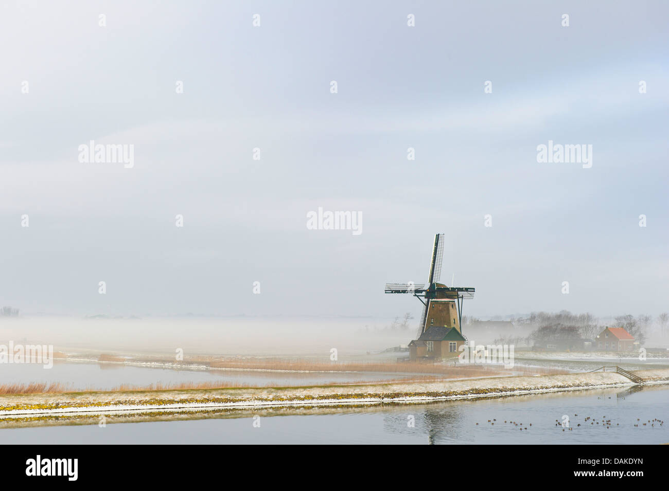 wind mill in the morning fog, Netherlands, Texel - Stock Image