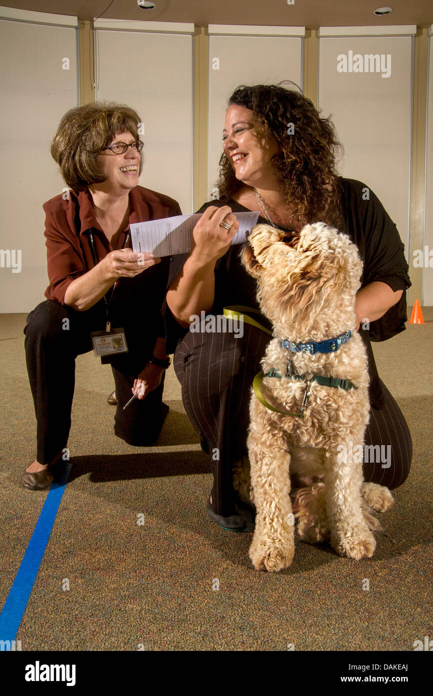 An official inspector awards a dog a diploma for passing evaluation as an emotional therapy animal. - Stock Image