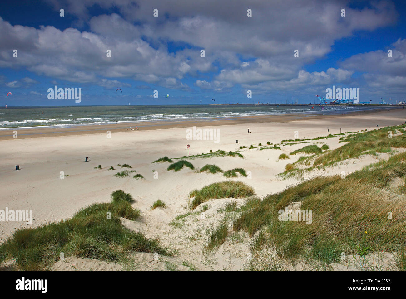 kitesurfers at the beach of Blankenberge with the harbour of Zeebrugge in the background, Belgium, West Flanders, - Stock Image