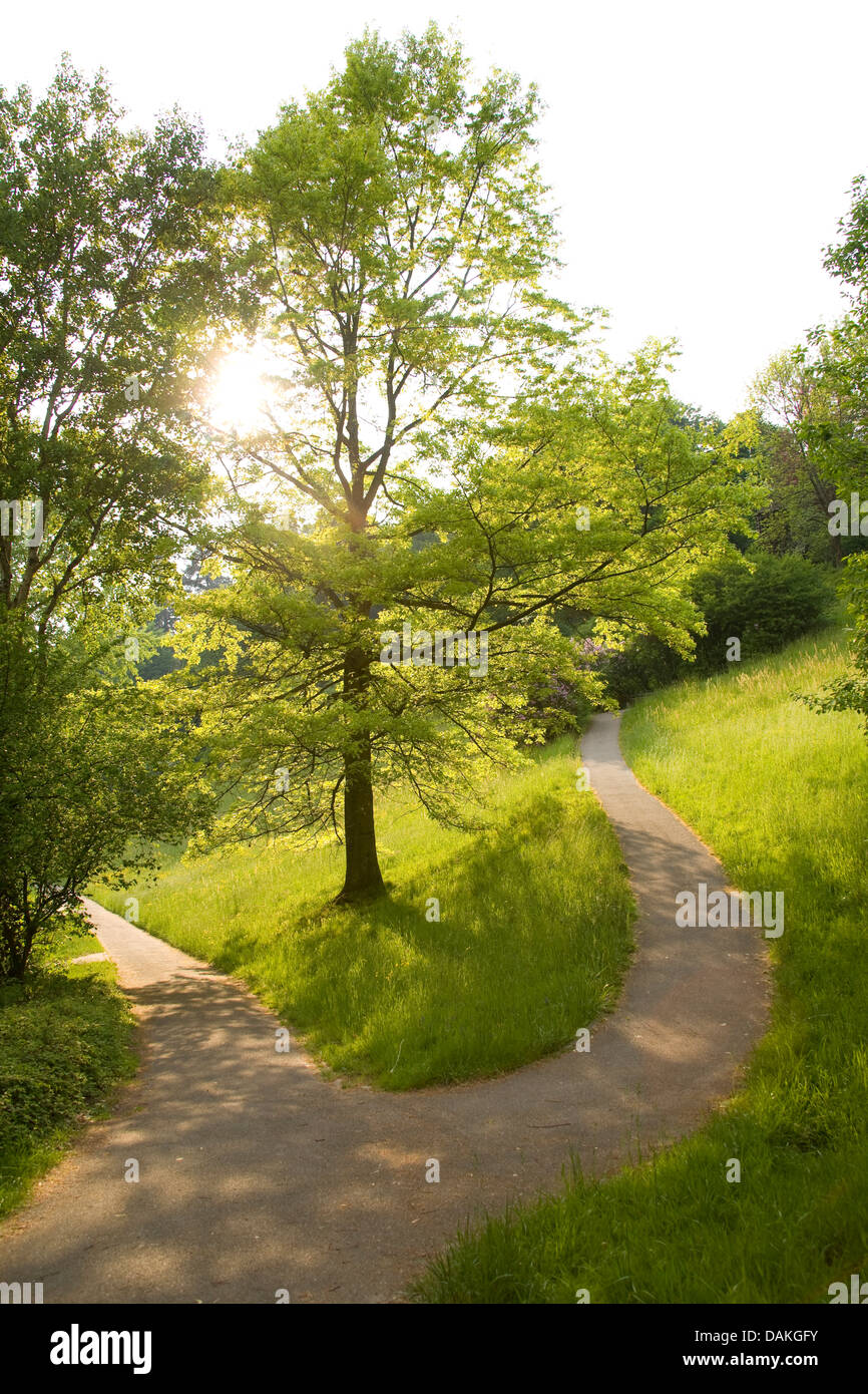 parting of the ways on the hillside, Germany, Baden-Wuerttemberg, Baden-Baden - Stock Image