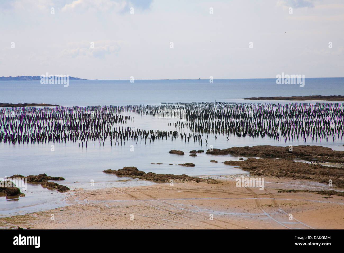 mussel cultivation at the coast, France, Brittany - Stock Image