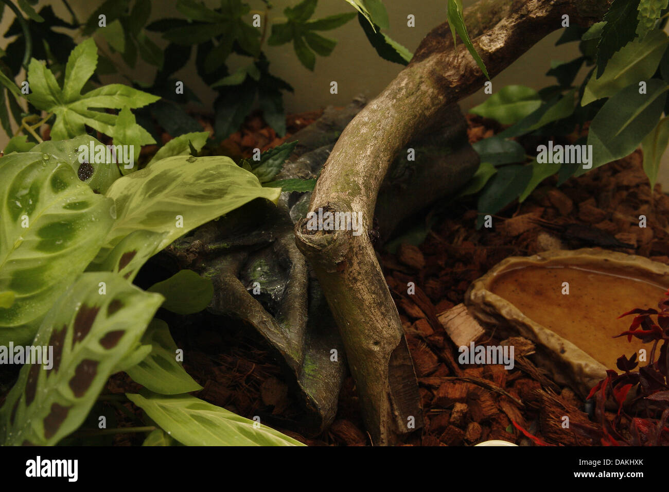 image of vivarium setup for geckos or amphibians - Stock Image