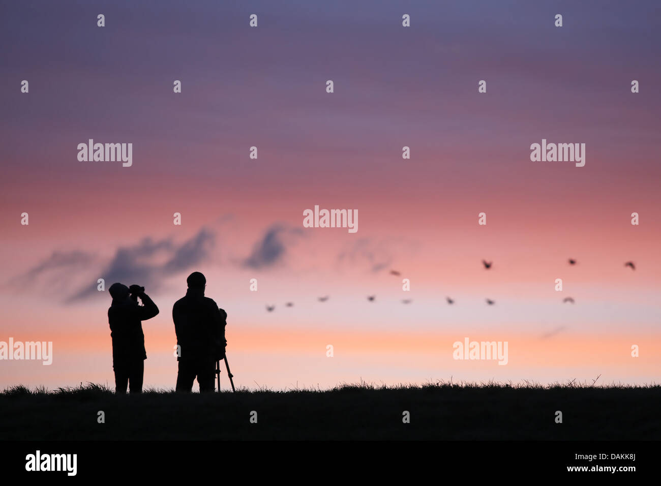 Silhouette of some birders with tripods and telescopes at sunset, Belgium - Stock Image