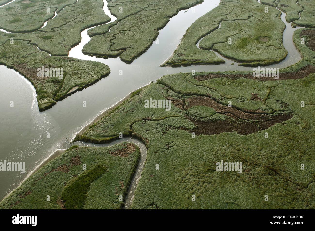 aerial view to river delta Verdronken land van Saeftinghe, Netherlands, Zeeuws-Vlaanderen, Verdronken land van Saeftinghe - Stock Image
