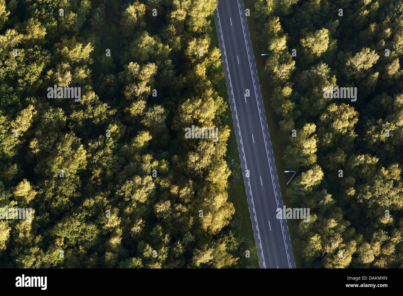 aerial view to street crossing a forest, Belgium - Stock Image