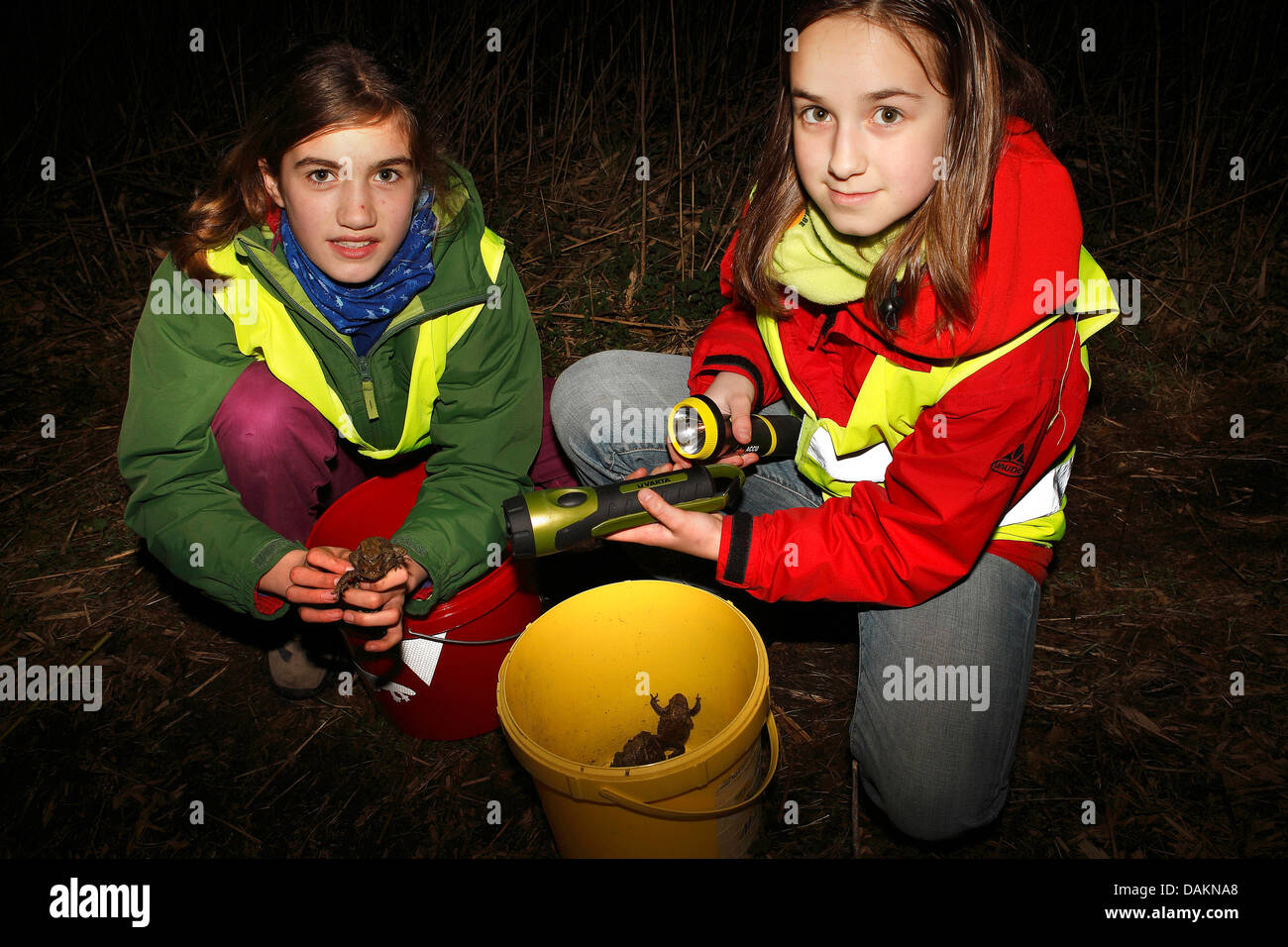 two girls helping toads with their spawning migration, Belgium - Stock Image