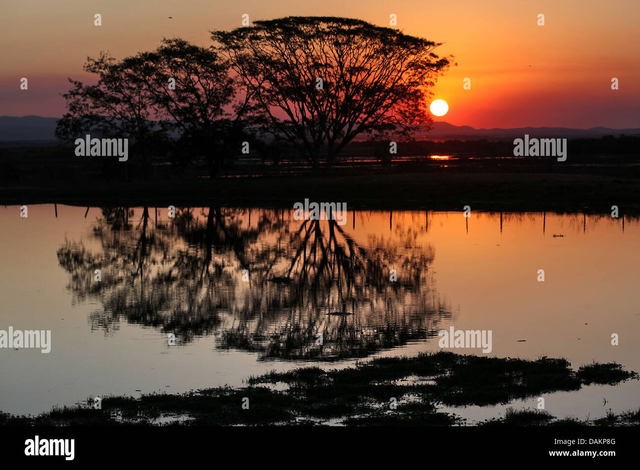 Pantanal Mato Grosso do Sul, Brazil, Mato Grosso do Sul Stock Photo