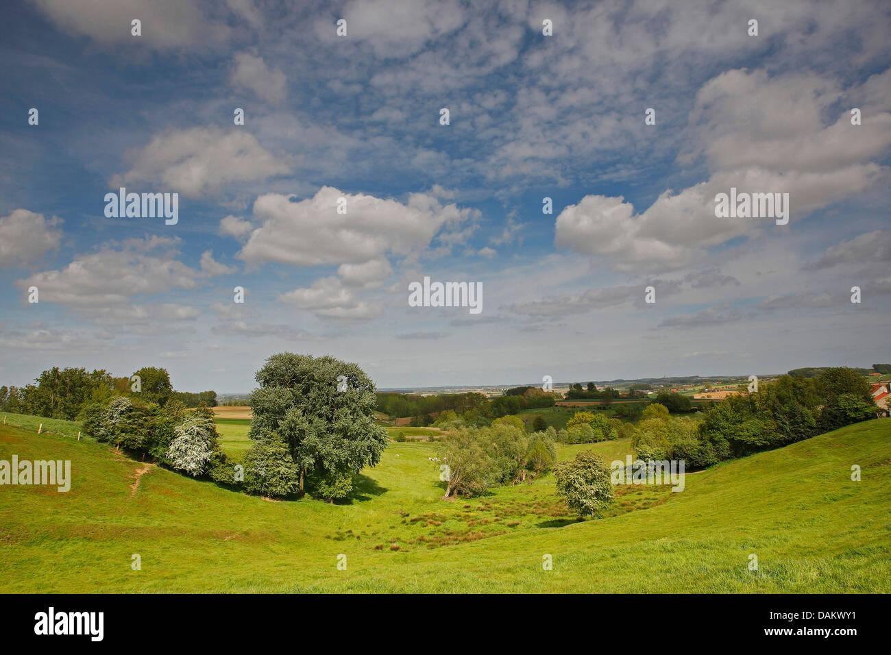 Bocage landscape with hedges and trees, Belgium, Scherpenberg - Stock Image