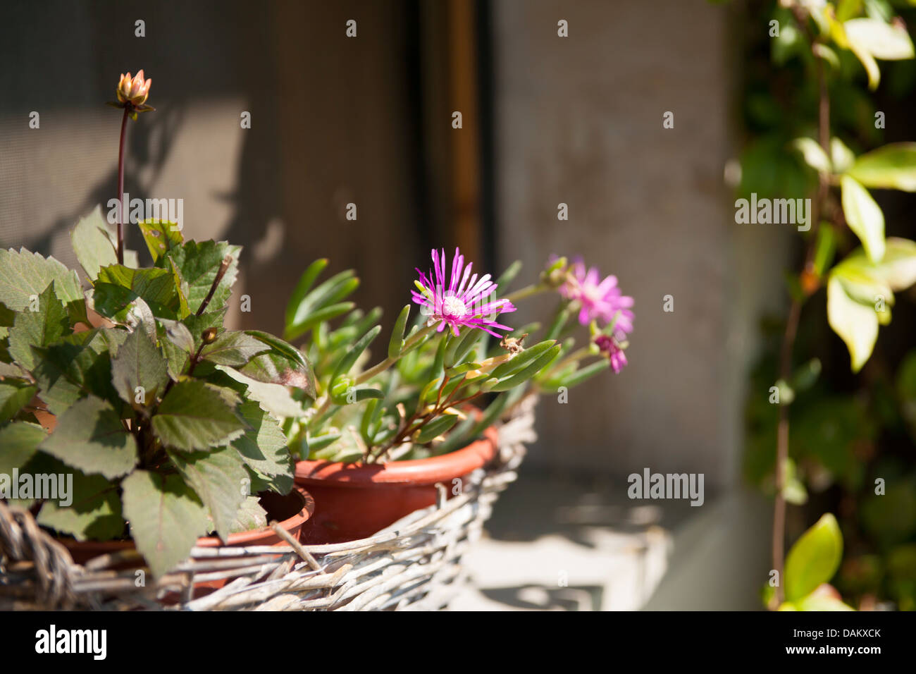 Garden lights,Tuscany - Stock Image