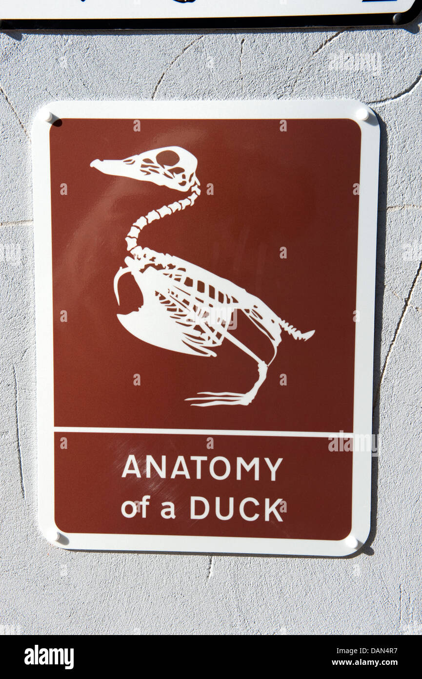 Funny Duck Stock Photos Funny Duck Stock Images Alamy