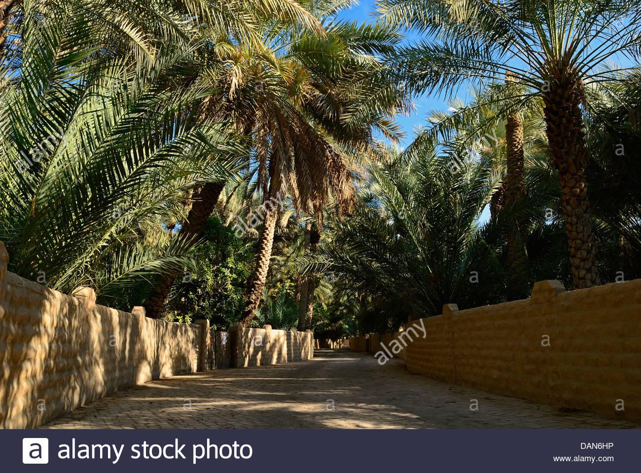 Palm Garden In Al Ain Stock Photos & Palm Garden In Al Ain Stock ...