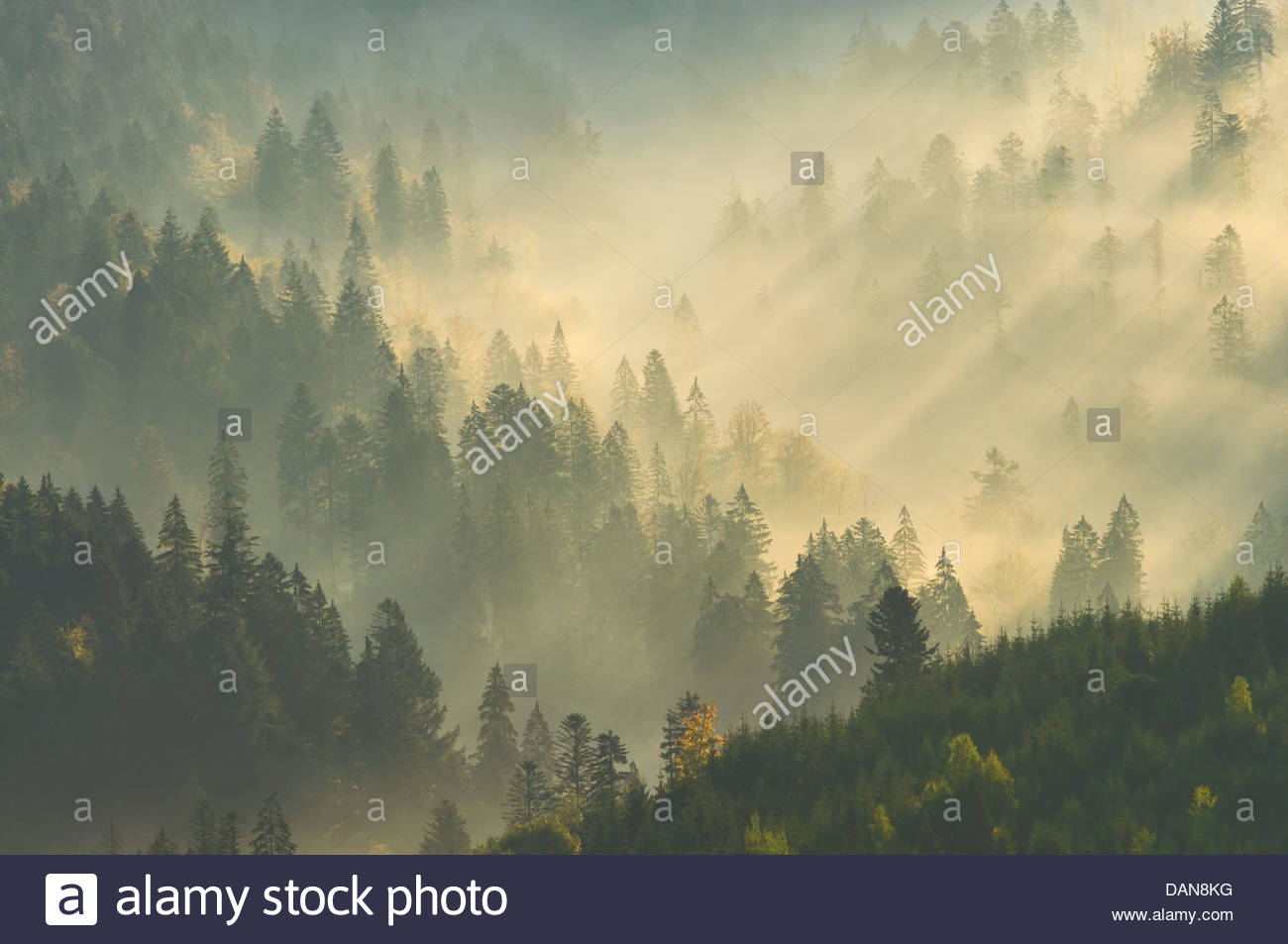 Germany, View of Upper Murg Valley and Black Forest at Baiersbronn - Stock Image