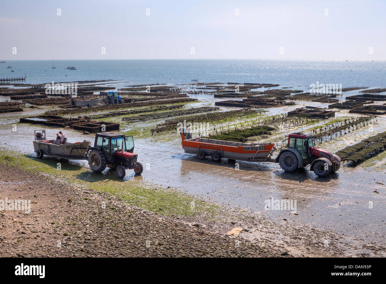 oyster farming in Cancale, Brittany, France Stock Photo