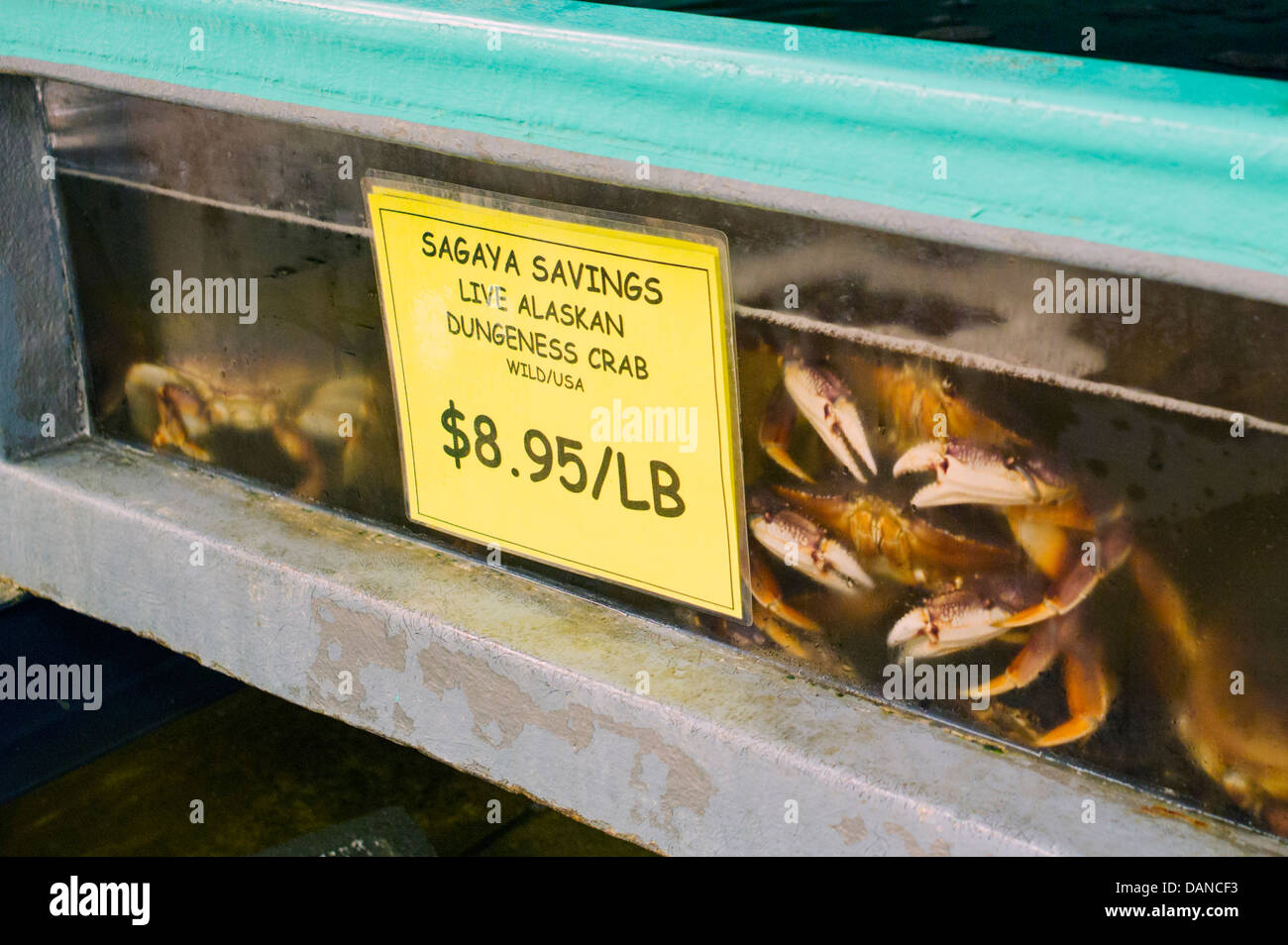 Live Alaska Dungeness Crabs in tanks on display, New Sagaya's Midtown Market, Anchorage, Alaska, USA - Stock Image