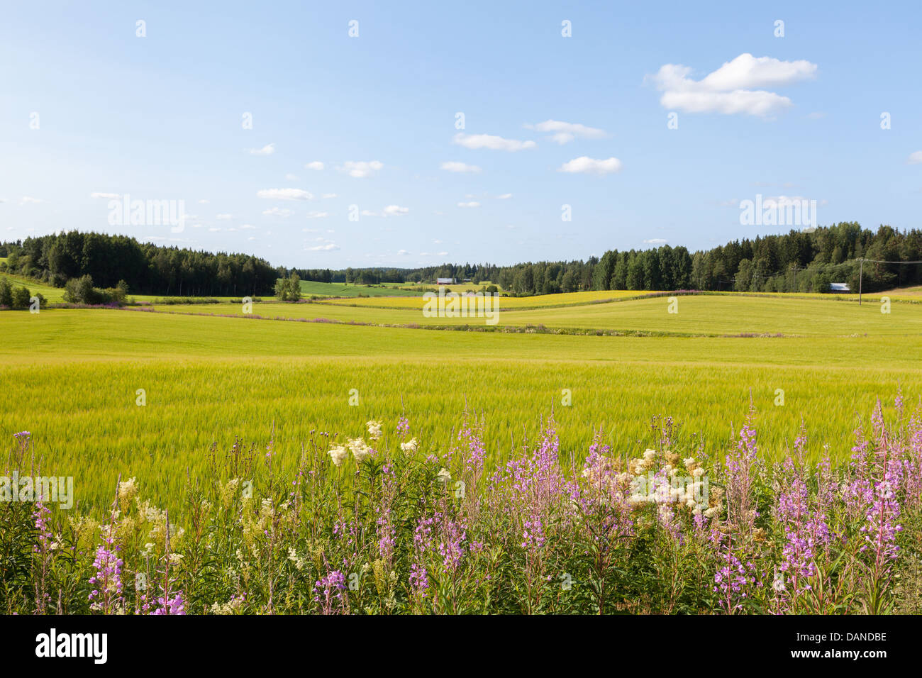 Beautiful countryside view in Finland - Stock Image