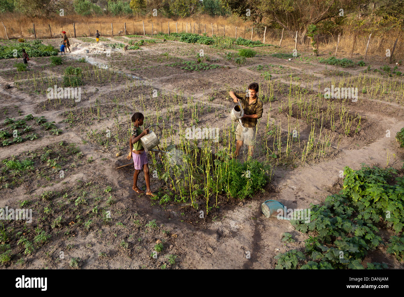 Agriculture, South Senegal. - Stock Image