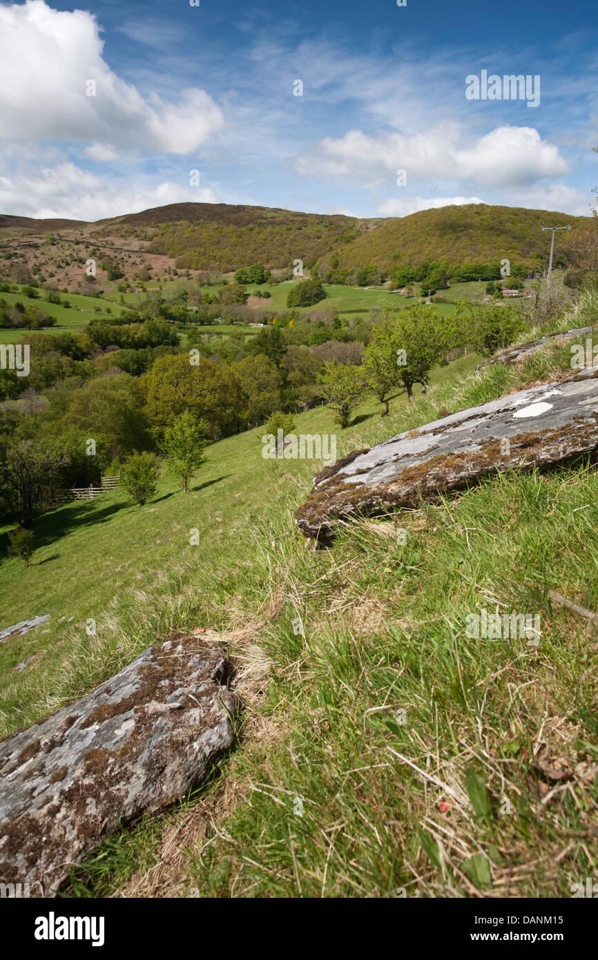 Hanging Sessile Oak Woodland at Gilfach Farm Nature Reserve, Rhayader, Radnorshire, Wales - Stock Image